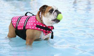 cani nuoto