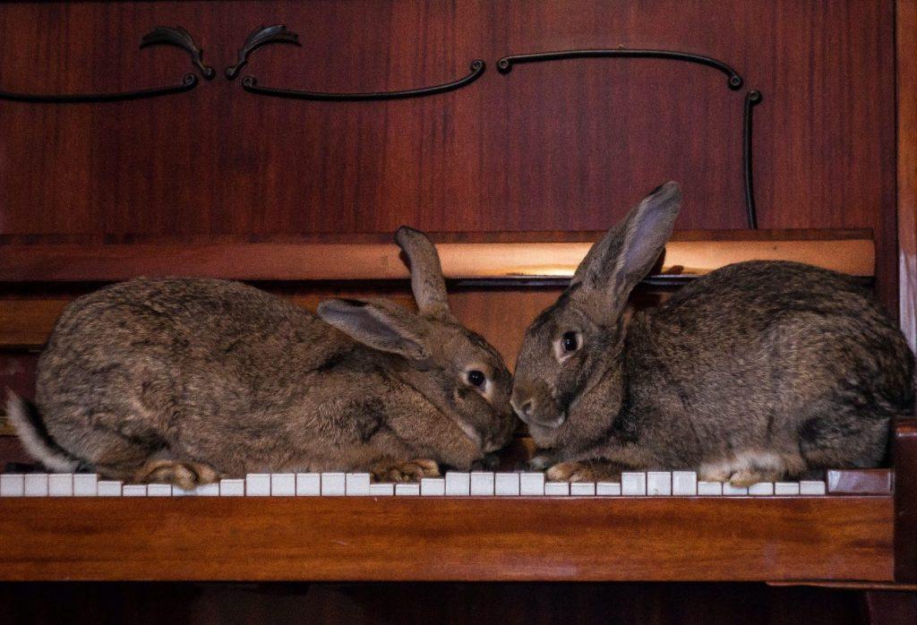 musica per animali