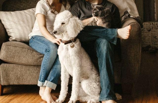 Funny Vegan news Farmaci uso umano per animali