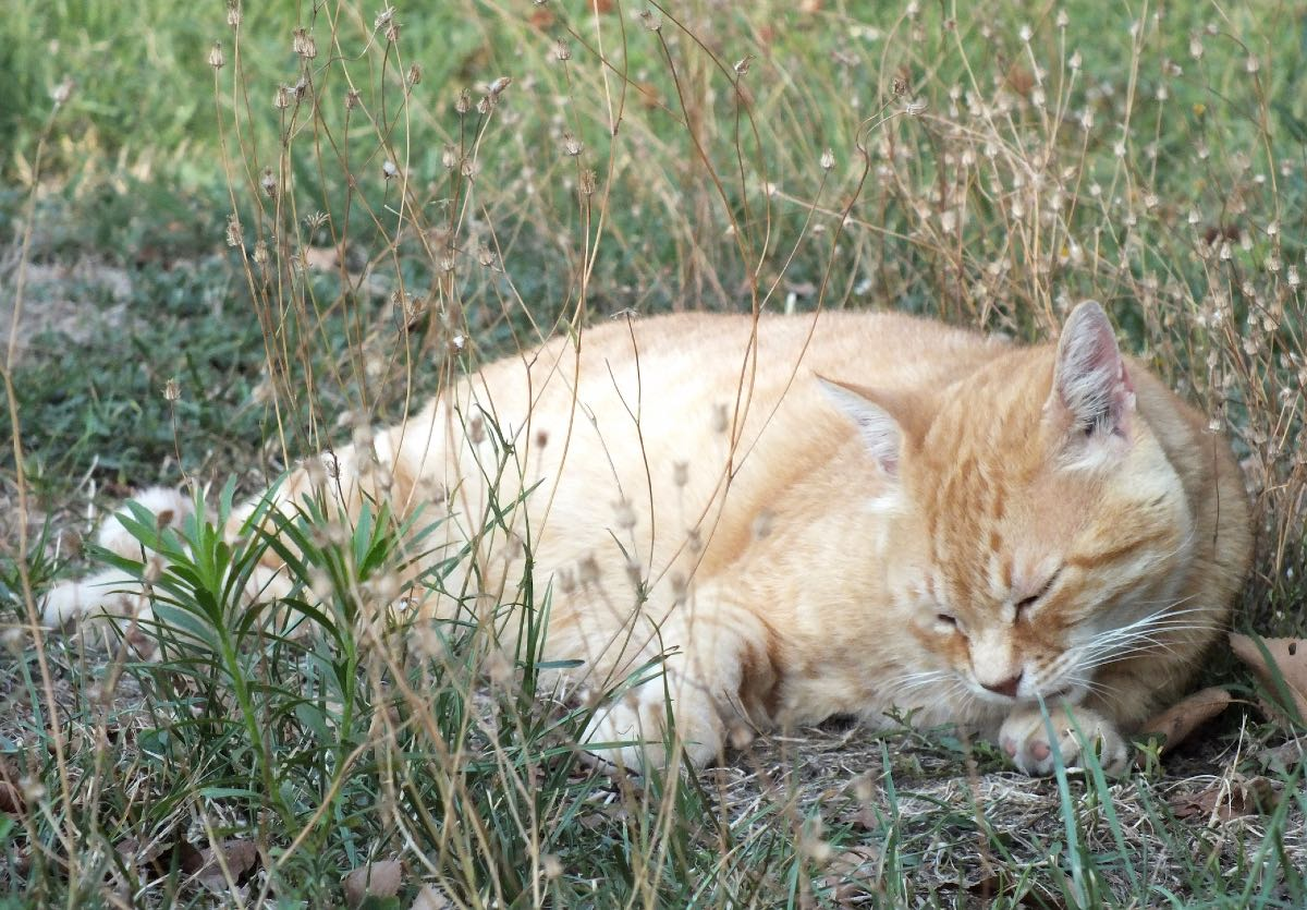 Gatti in giardino